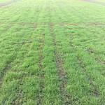 Lay a lawn grass
